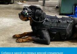 Собаки, отправленные в армию США, вскоре могут быть оснащены очками дополненной реальности